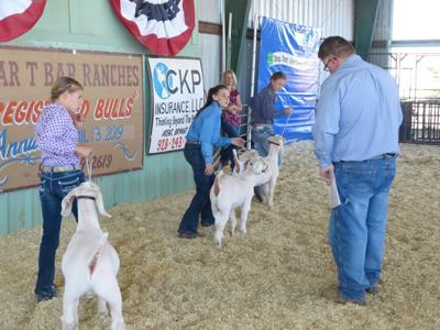Navajo County Fair Round Robin Show