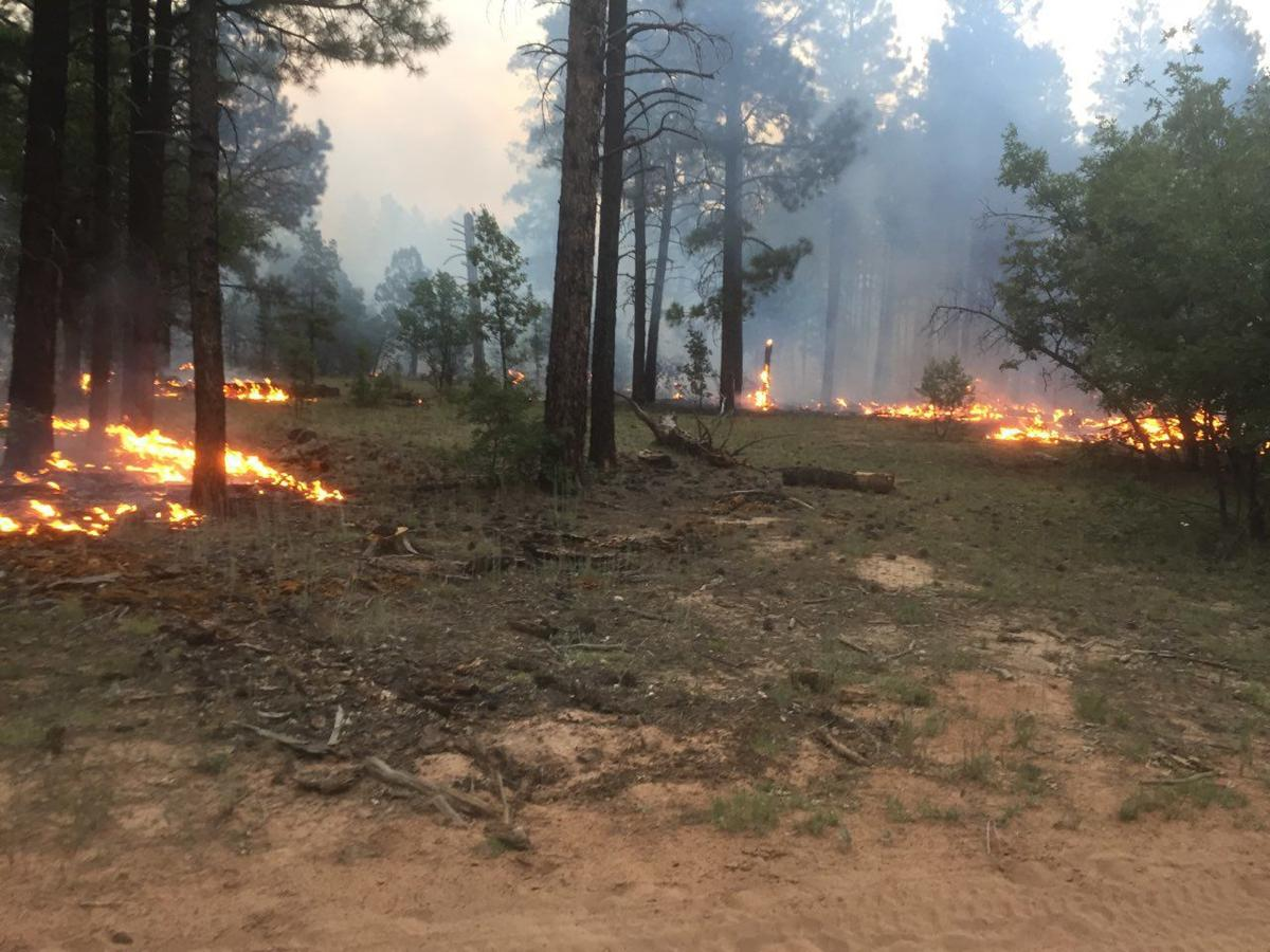 Bagnal Fire -picture 1 from USFS