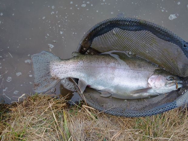 White mountains provide the best fly fishing in the state for Best trout fishing states