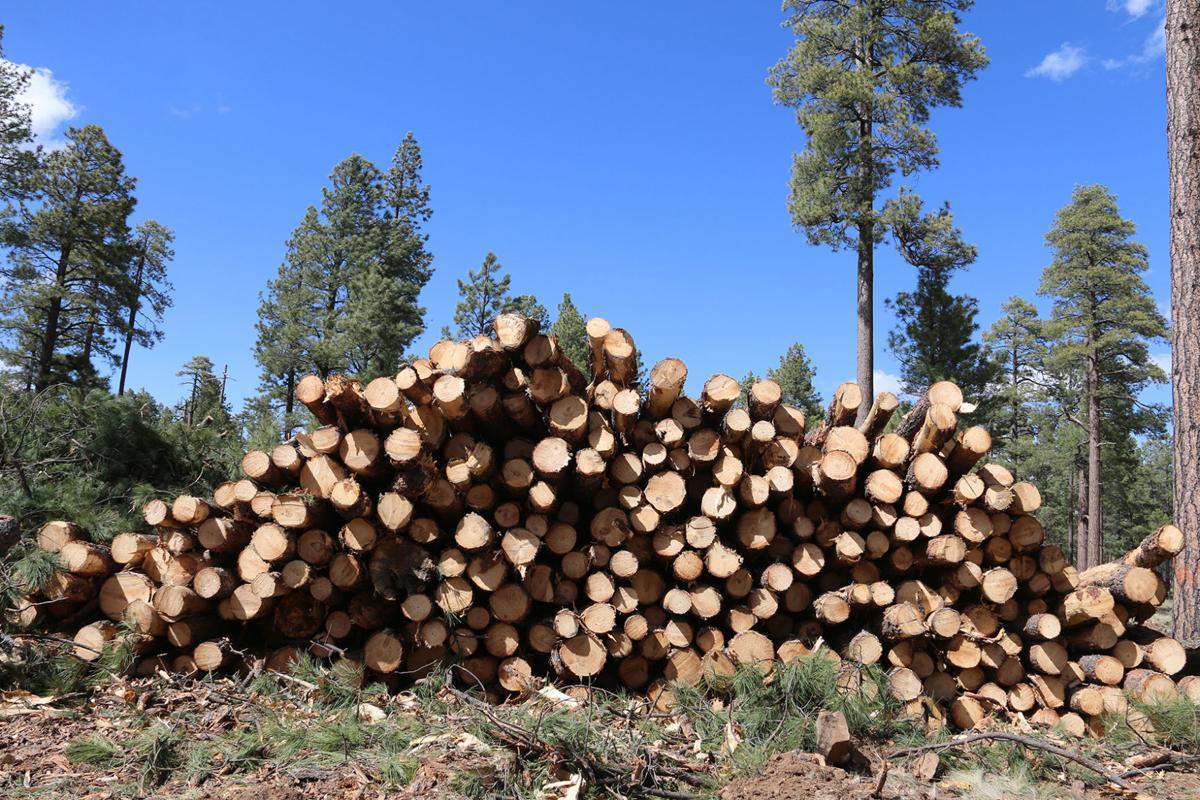 Forest biomass