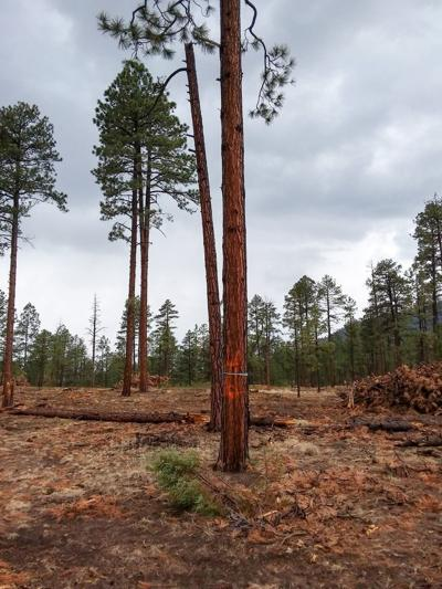 Forest restoration critical to ecological balance, harmony