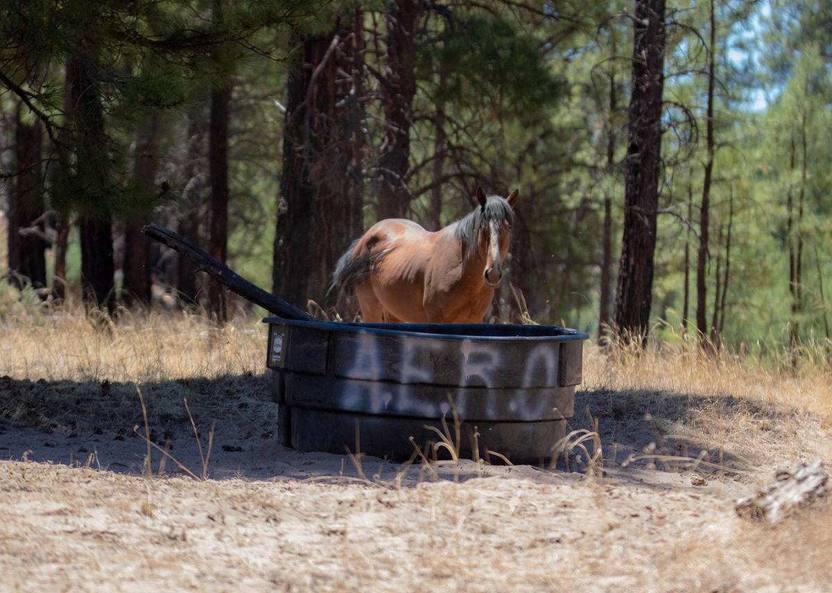 Heber horses