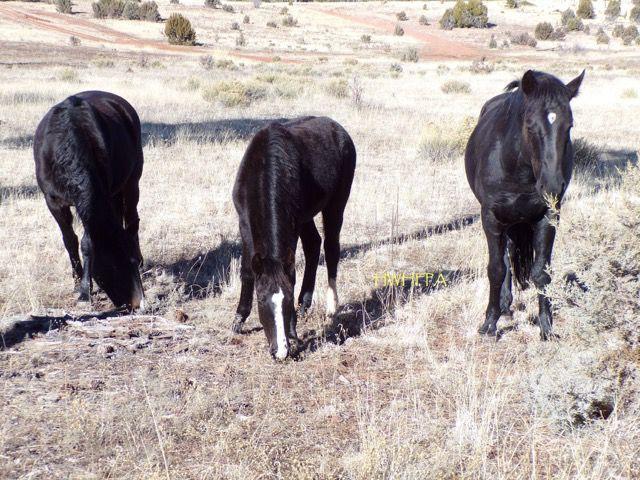 Black mare found deceased on Jan. 26