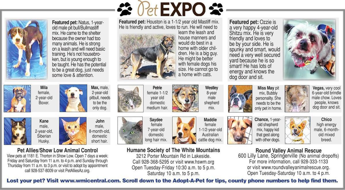 Adopt a Pet | Adopt a Pet | wmicentral com
