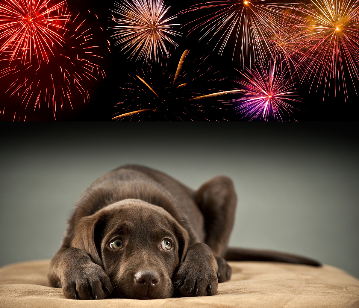 How To Get Dogs Used To Fireworks