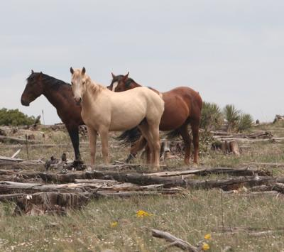 Arrest made in shooting death of two domestic horses