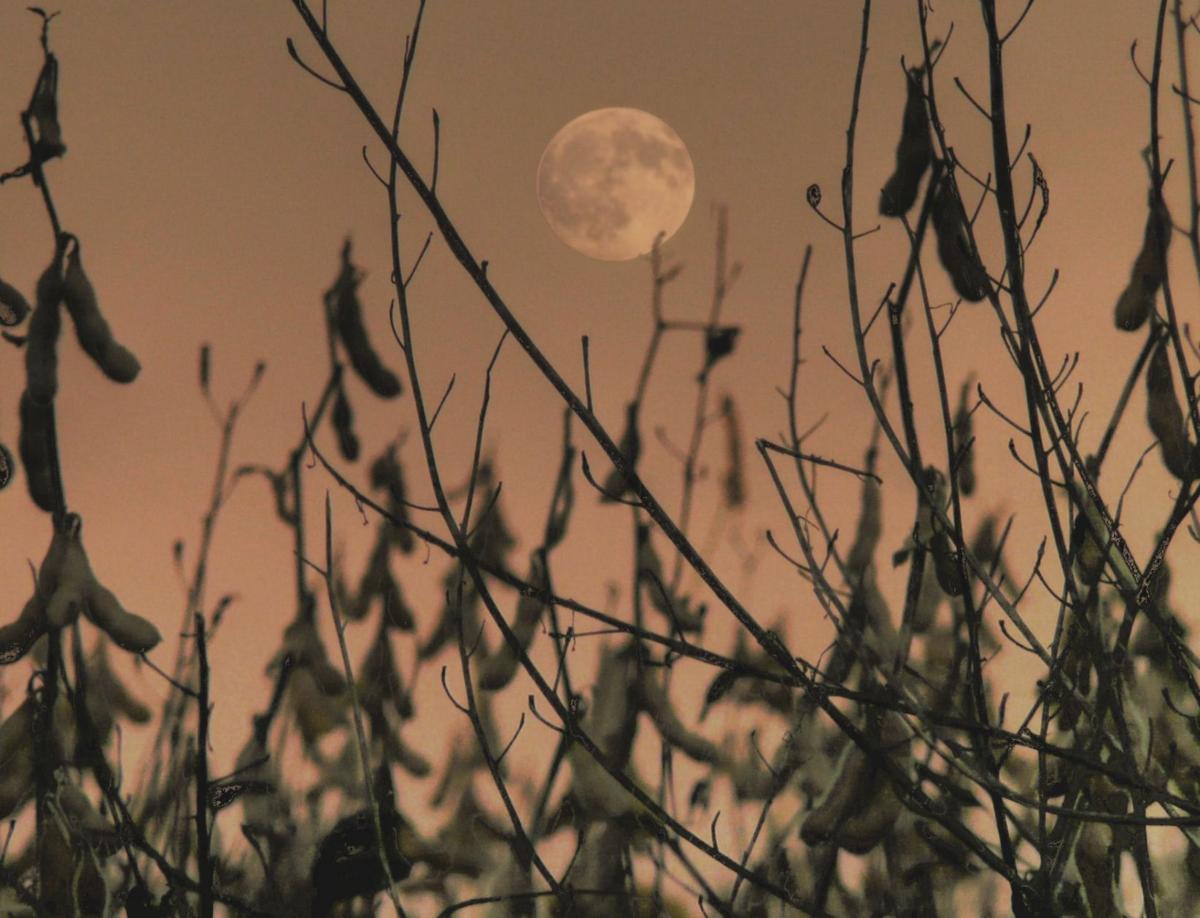 Full Moons 5