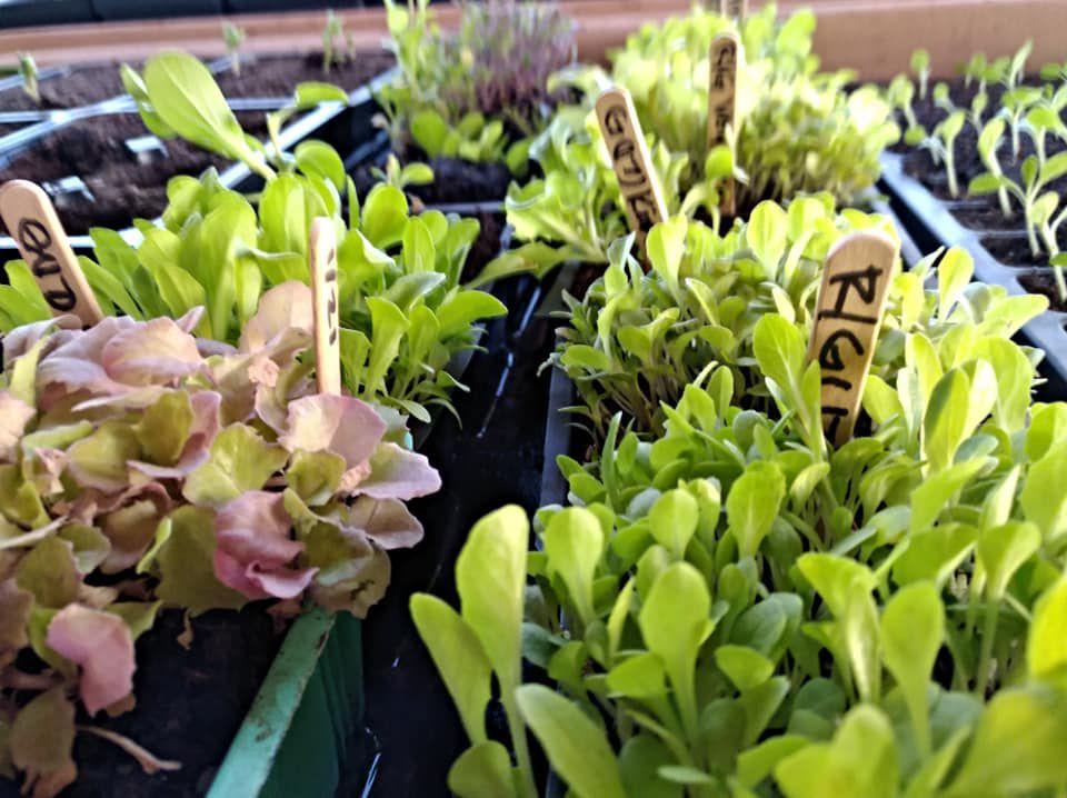 plants at Coffee Pot Farms