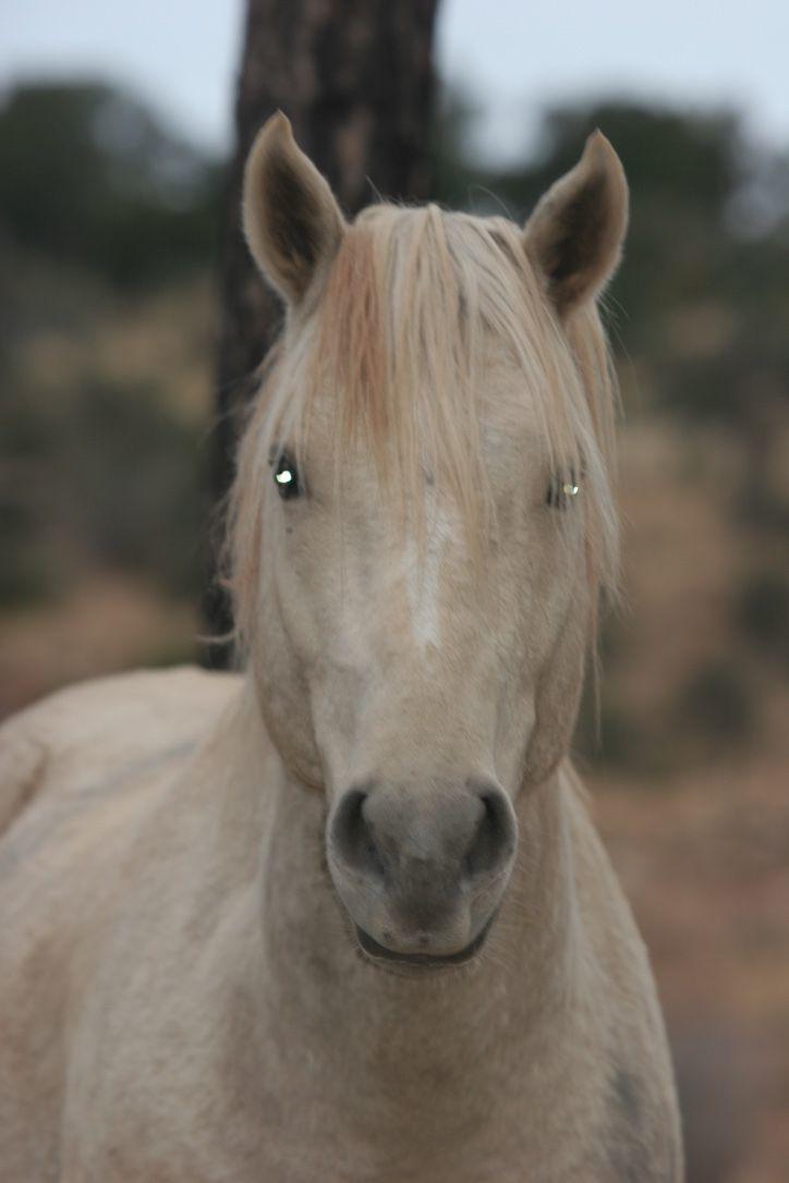 Another Heber Wild Horse