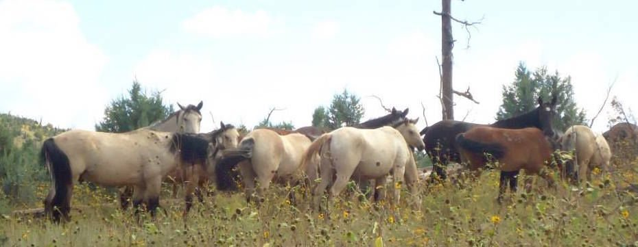 Heber horses south of SR260
