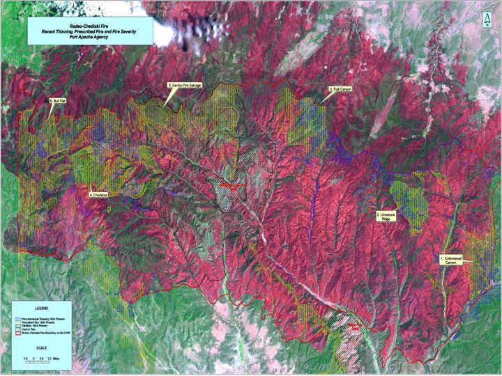 Rodeo-Chediski burn severity map