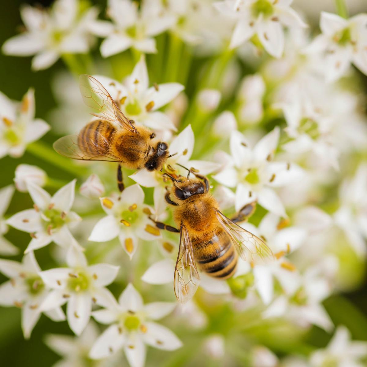 You can BEE Informed - bees on a flower