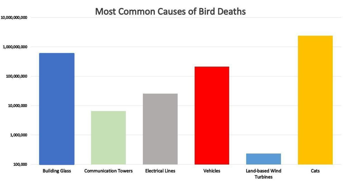 causes of bird deaths