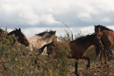 Public comments re: Heber Wild Horses in review