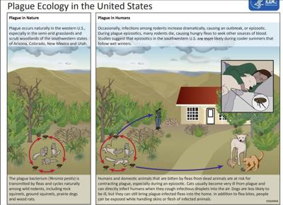 Plague ecology in the US