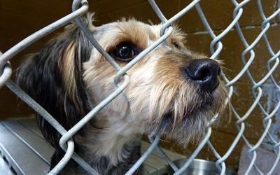 Groups say new federal law gives leg up in fight against animal cruelty
