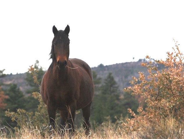 Heber mare grazing