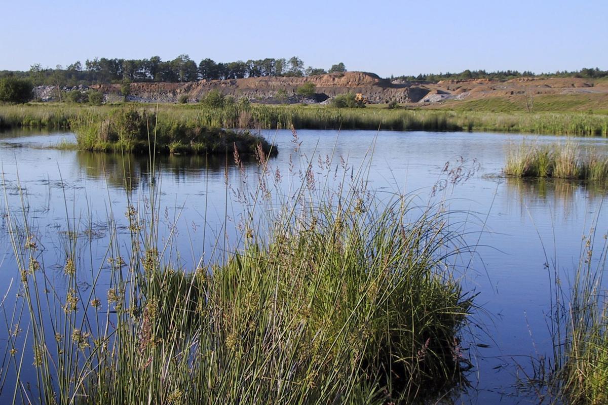 Tucker County wetlands