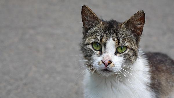 Rabid cat concerns