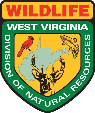 Division of Natural Resources logo