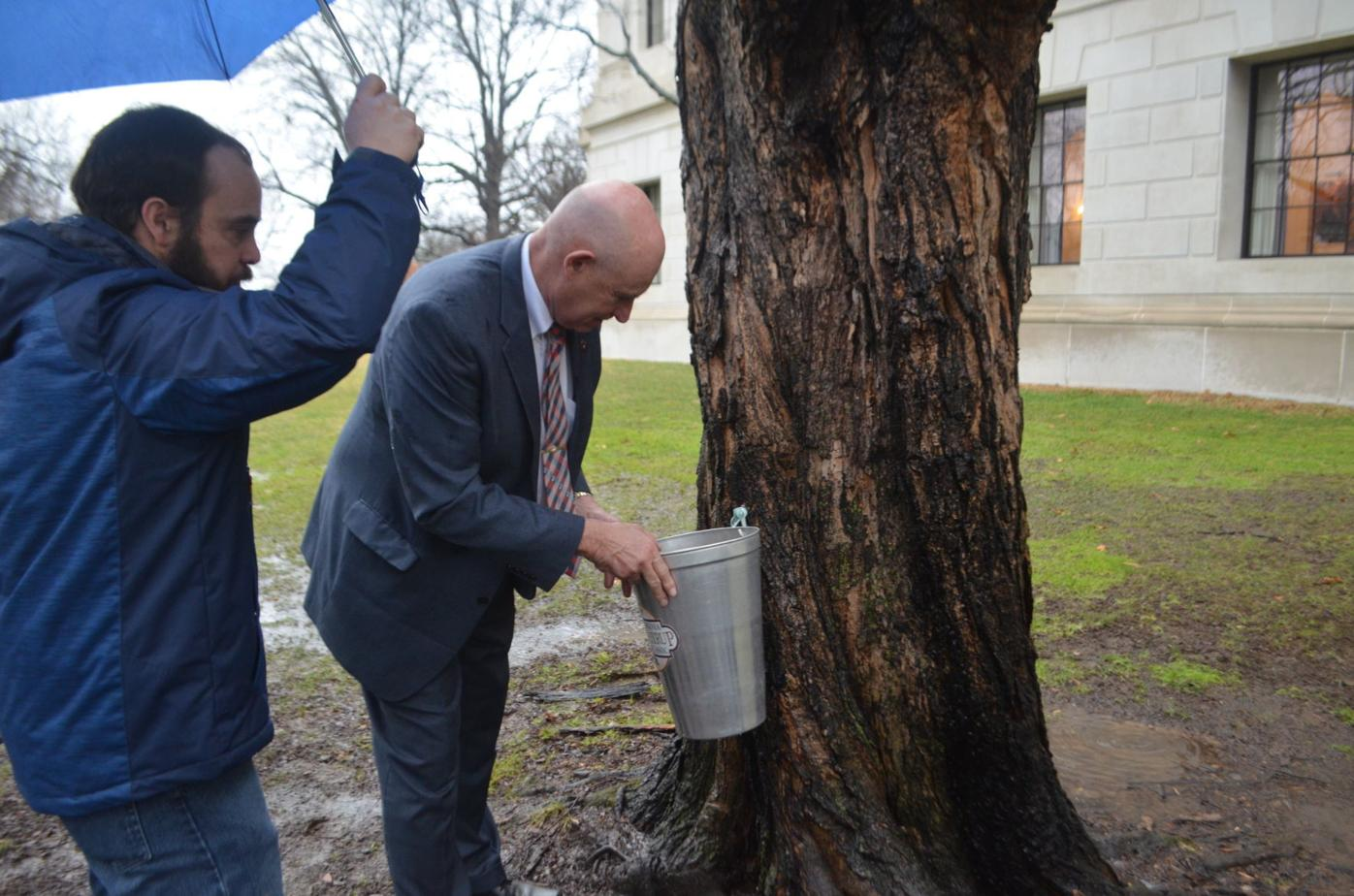 Ceremonial Maple Syrup Tree Tap