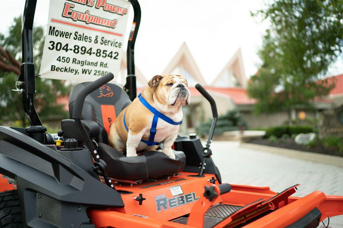Babydog Lawnmower