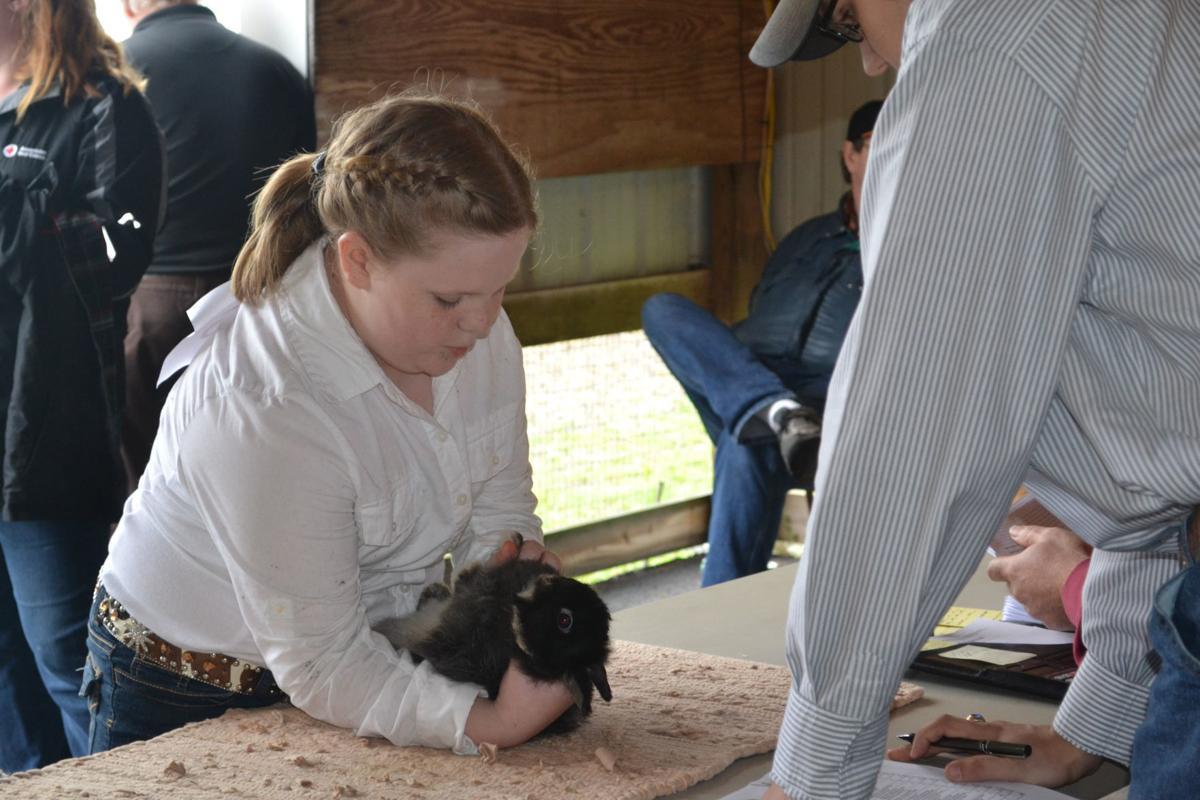 Rabbit workshop