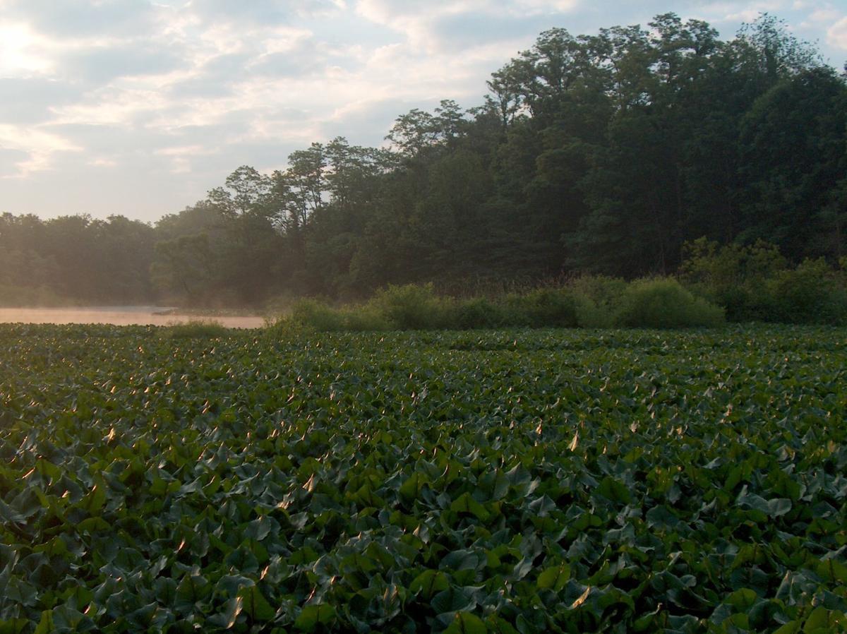 Preston County wetlands