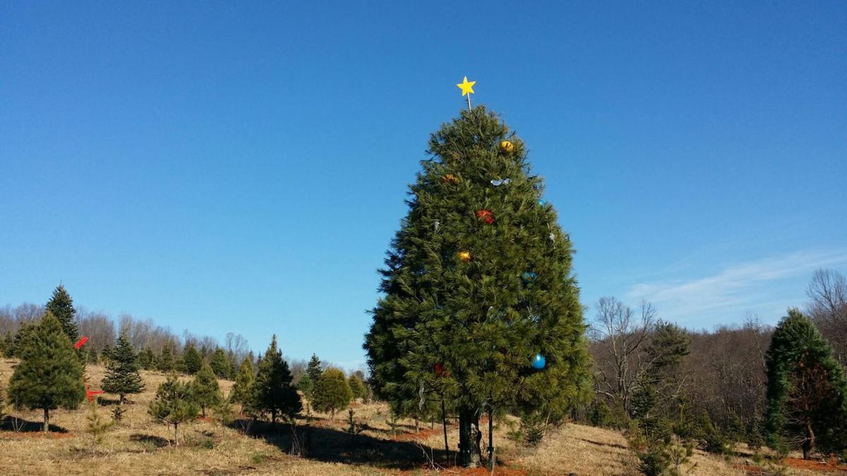 Local Christmas tree farms keep holiday traditions alive, Mulkeen ...