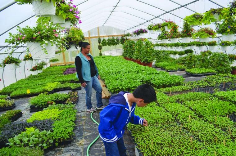Family greenhouse