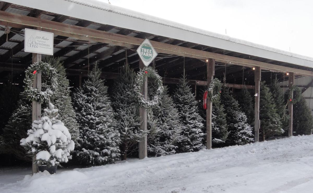 Mountain Top Tree Farm in final year of retail sales