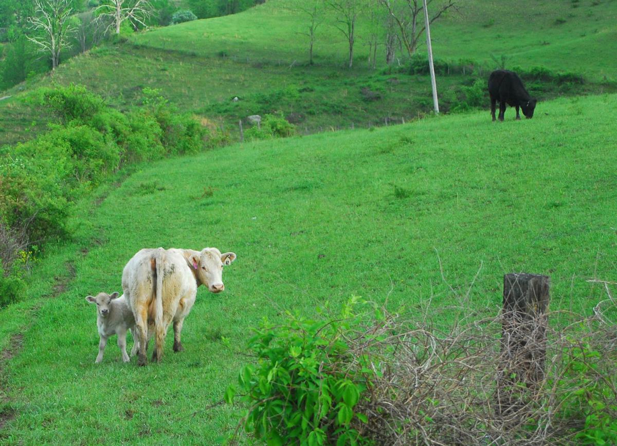 State farmers warned of new species of tick   WV News   wvnews com