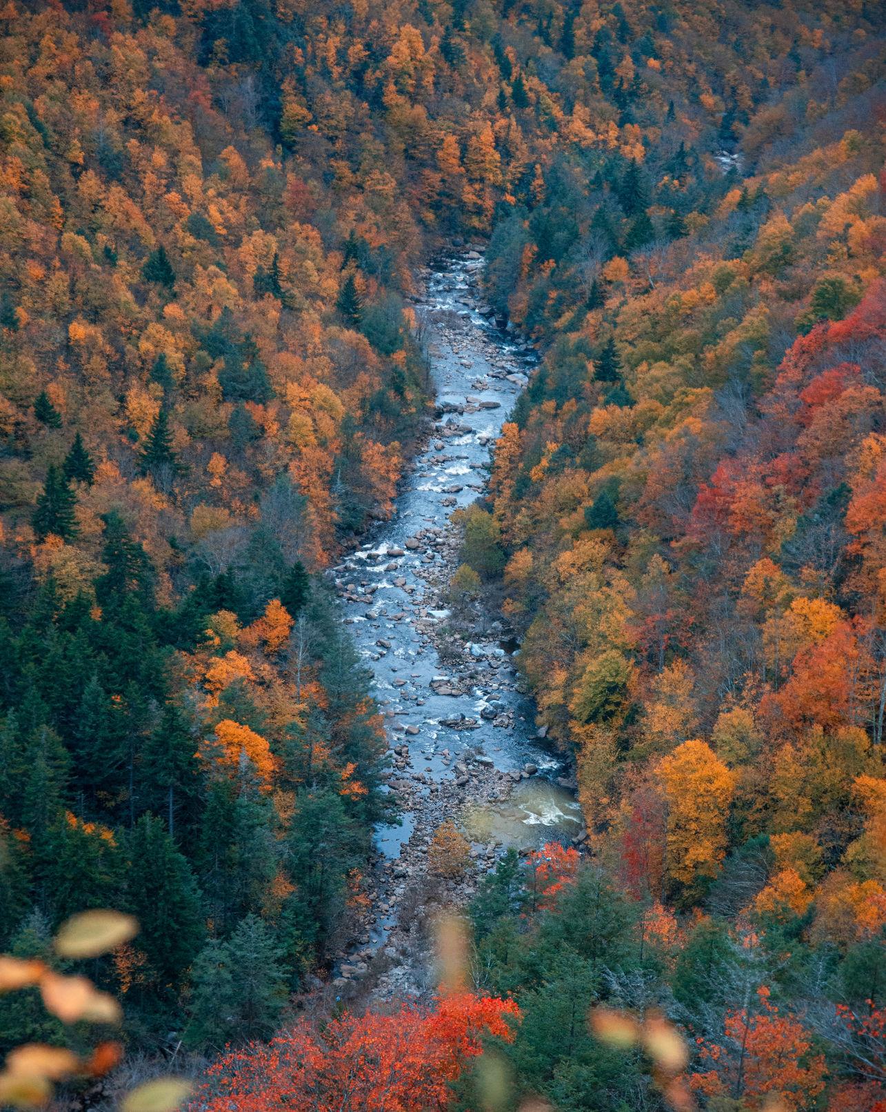 Canaan — Forest Stream Overhead