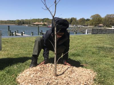 Wolf Den Run tree