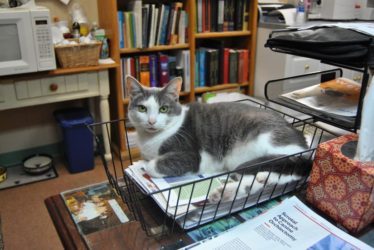 Weston Veterinary Hospital Open To Animals From Around The