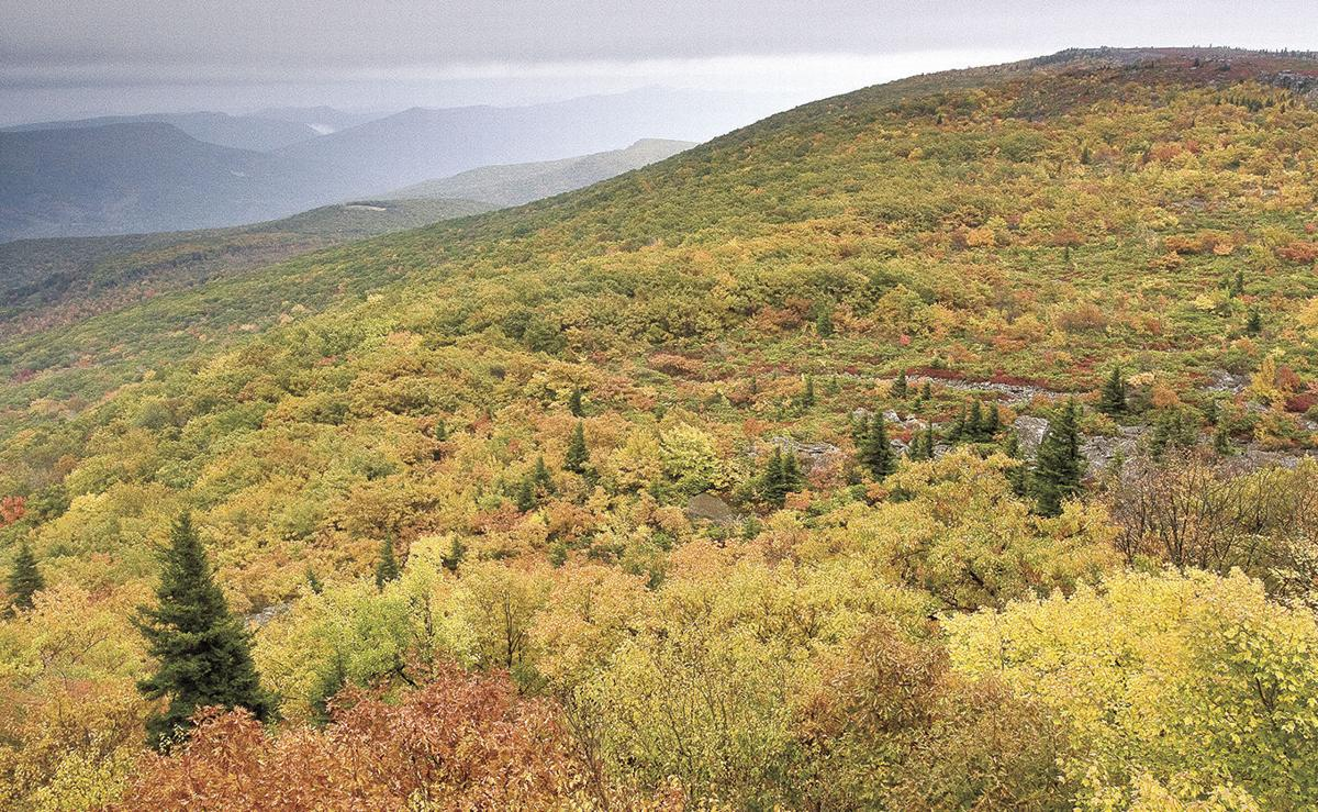 Bear Rocks Preserve on Allegheny Front