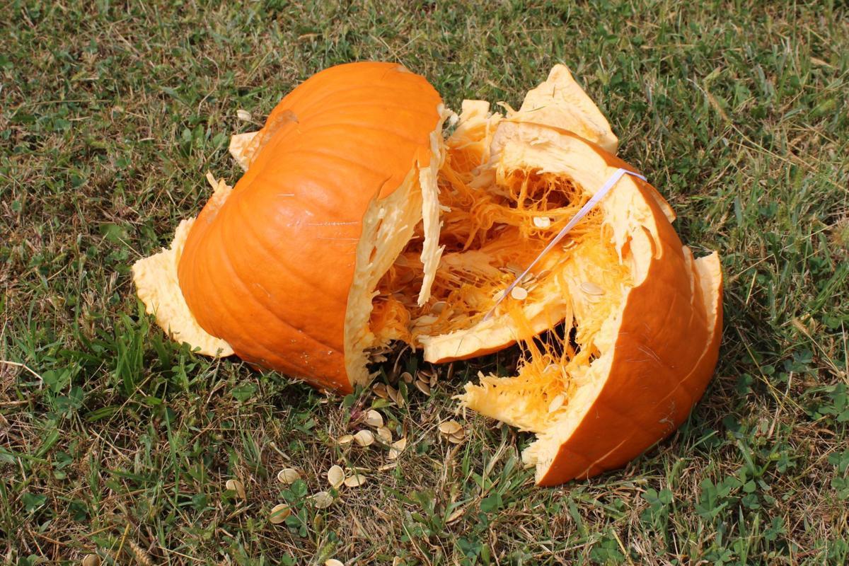Deceased pumpkin