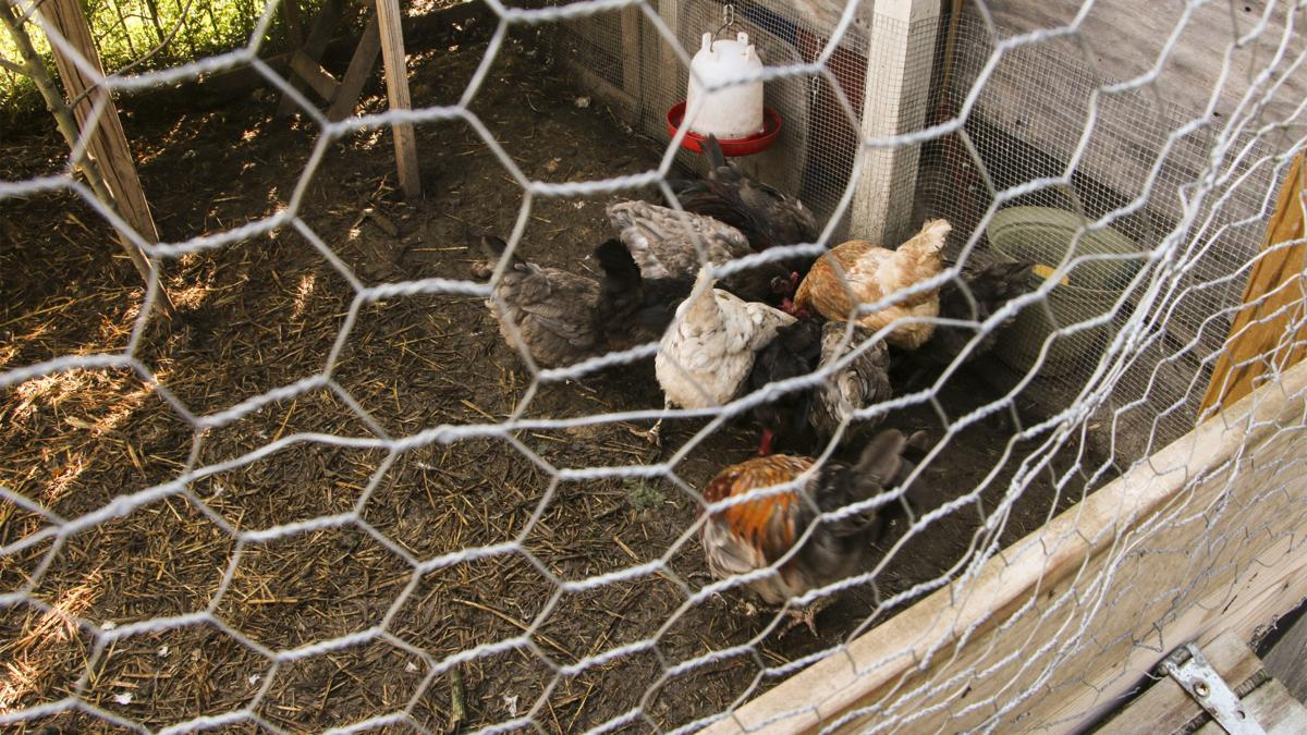 Chicken coop (copy)