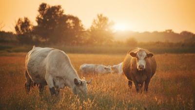 West Virginia Beef Expo