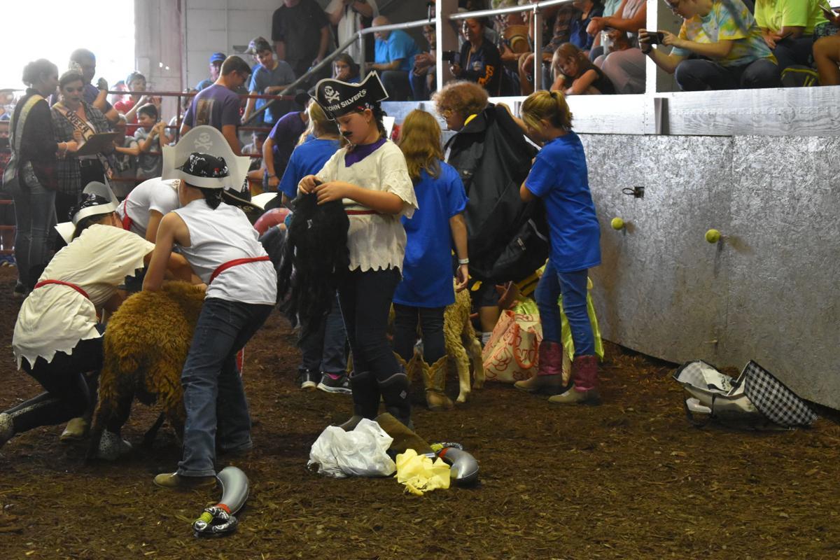 Lamb dressing contest