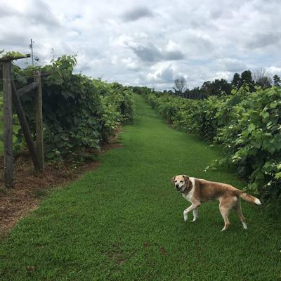 A West Virginia winery