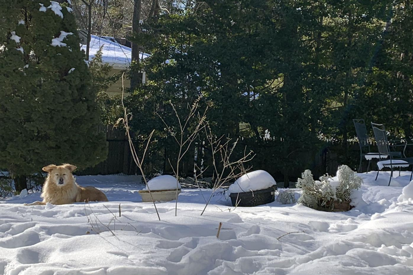 The Garden in Winter in a row