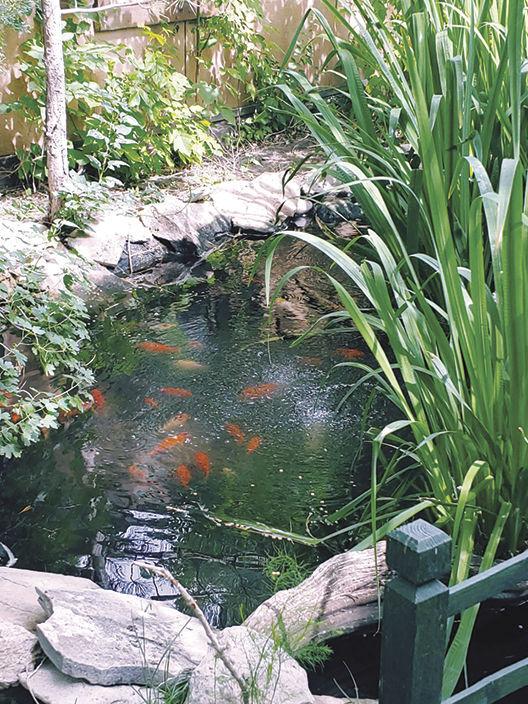 Pond Tour - Pond