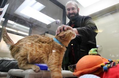 animal shelter file