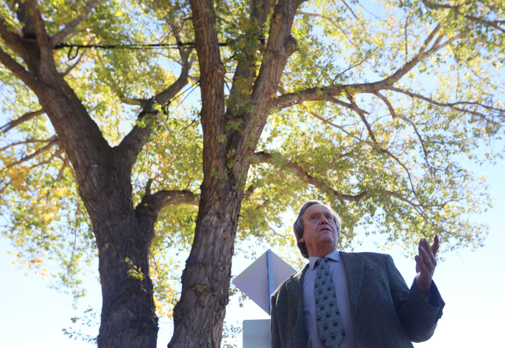 City hall cottonwood tree may get reprieve after Laybourn's protest | Wyoming News