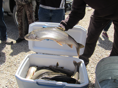 Mackinaw lake trout Wyoming Game and Fish Department