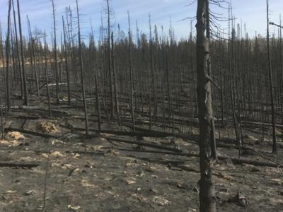 Mullen Fire black treees 110820