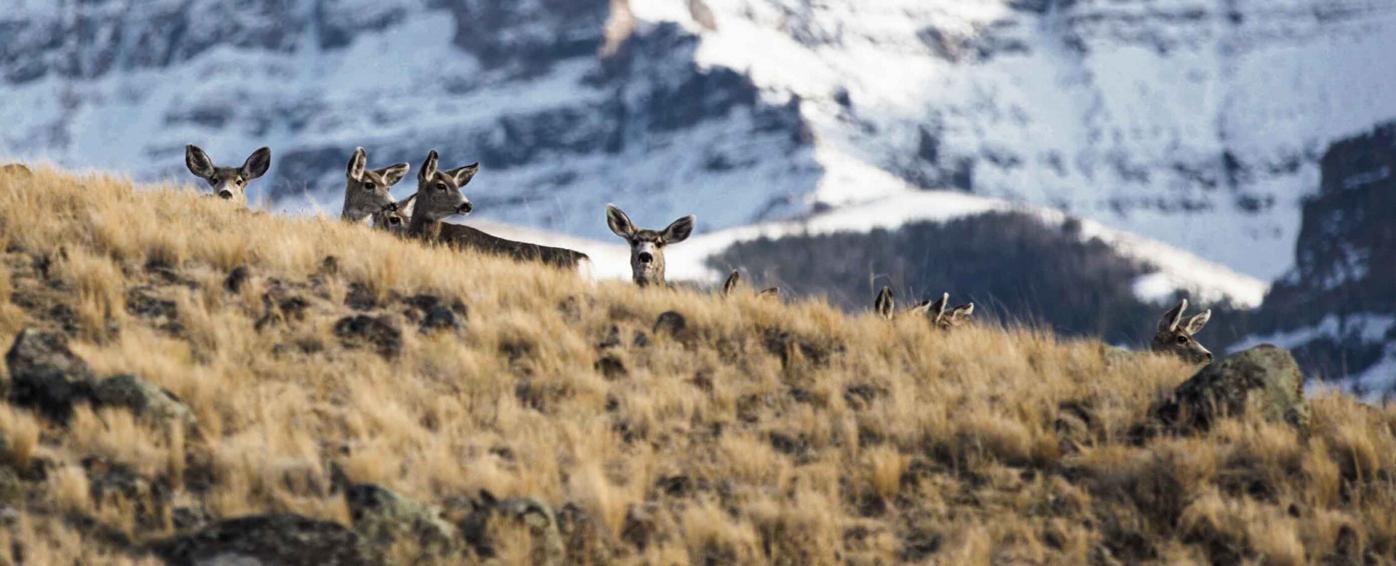 deer-on-hill.jpeg