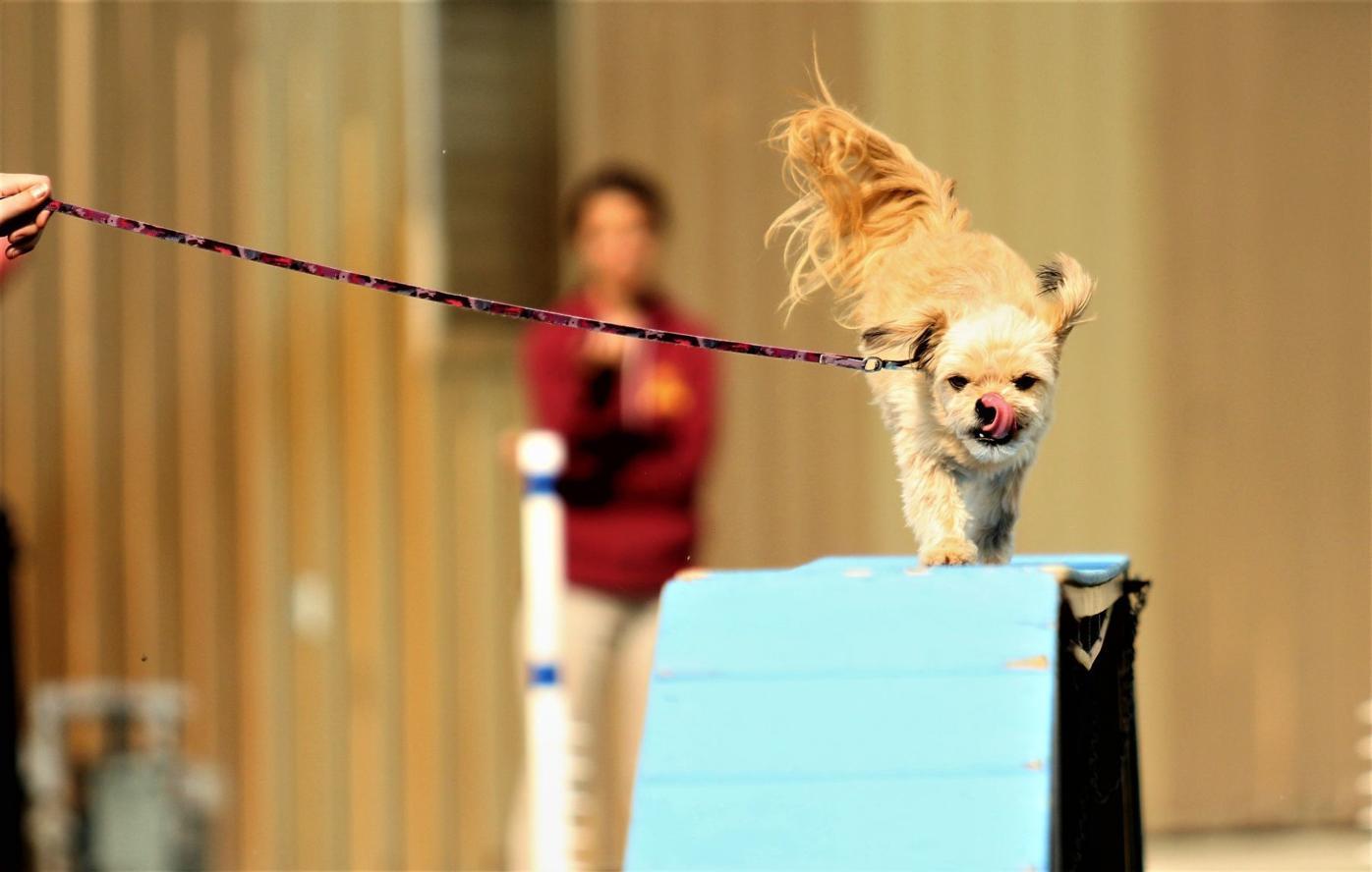 8-3-18 dog show 1.JPG