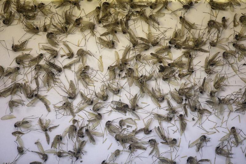 After Zika cases, Utah ramps up mosquito monitoring efforts